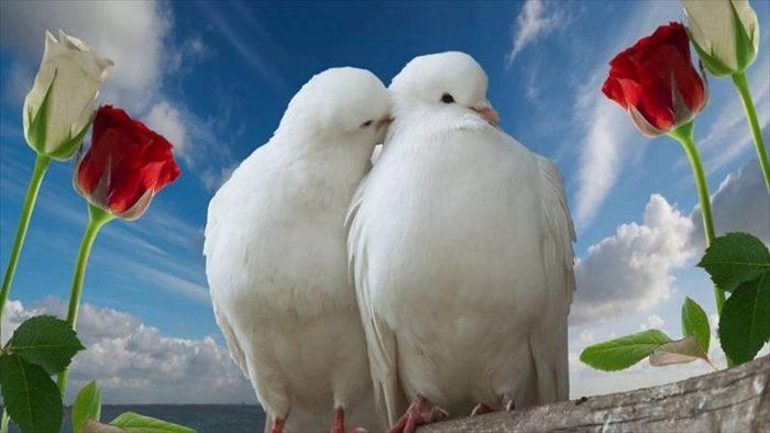 Inilah 10 Kumpulan Kata Cinta Yang Paling Romantis